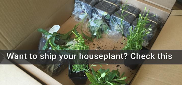ship-plants