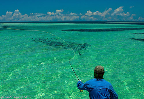 Key west fishing archives share your ideas with readers for Key city fish