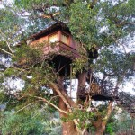 Jungle Stay in Dandeli