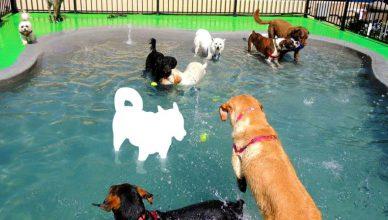 Dog Boarding Center